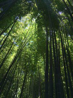 和のアロマ 鎌倉 竹林