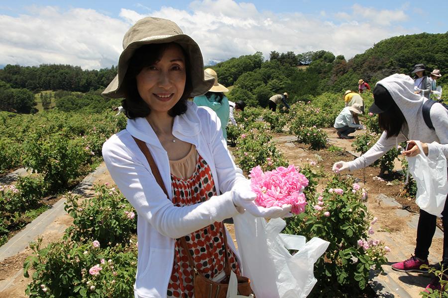 バラの摘み取り体験