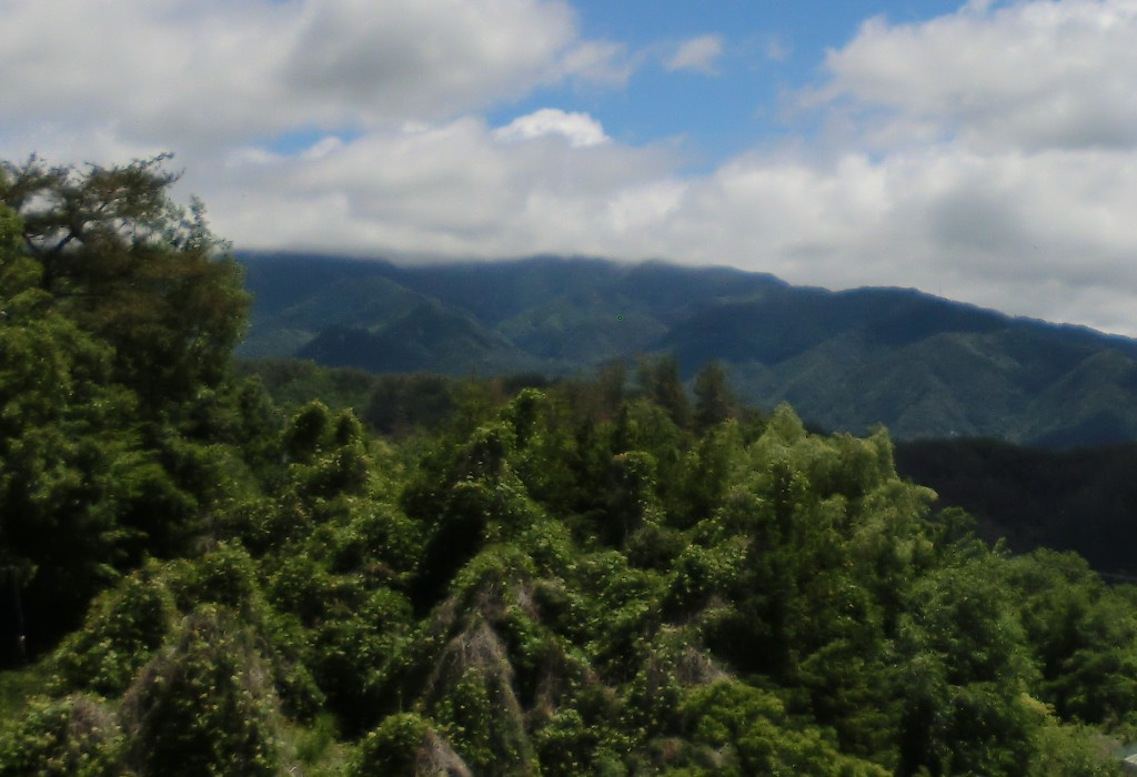 日本の森林 アロマ 間伐材