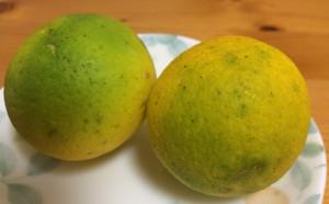 柚子 ゆず すだち カボス かぼす yuica lavare 新宿校 大分 養殖 紅葉