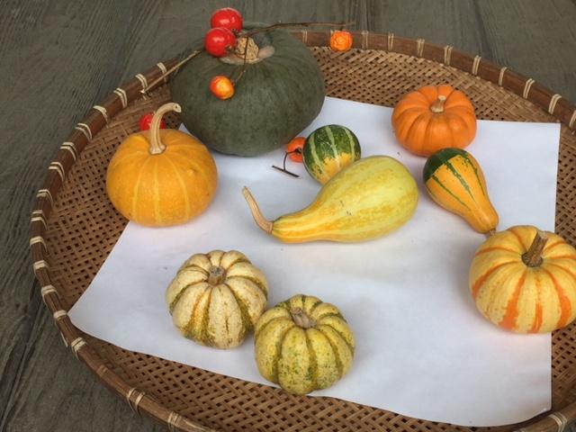 アンチエイジング 抗酸化 かぼちゃ